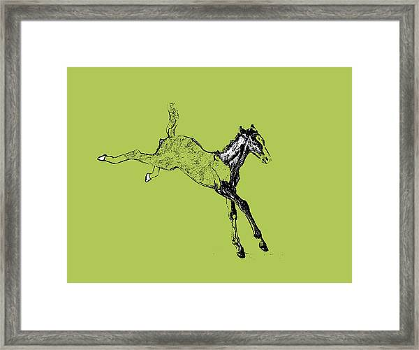 Leaping Foal Greens Framed Print
