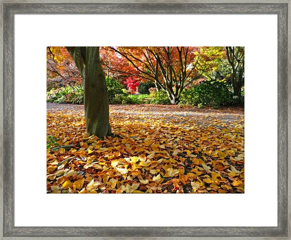 Leaves And More Leaves Framed Print