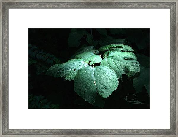 Leaves In A Patch Of Sunlight Framed Print