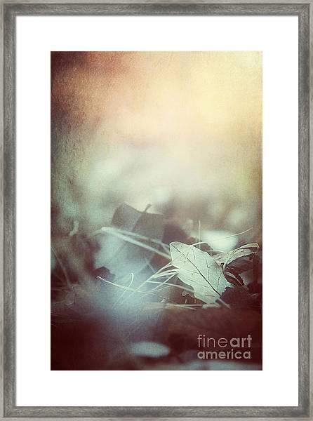 Leaves Of Time  Framed Print