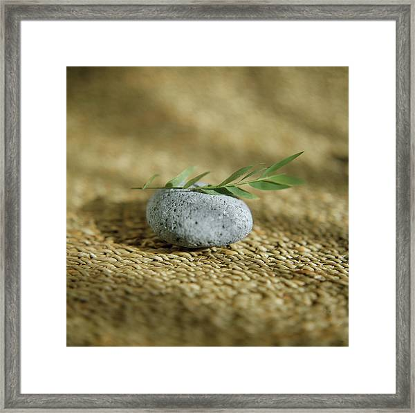Leaves On A Pebble Framed Print by Cristina Pedrazzini/science Photo Library