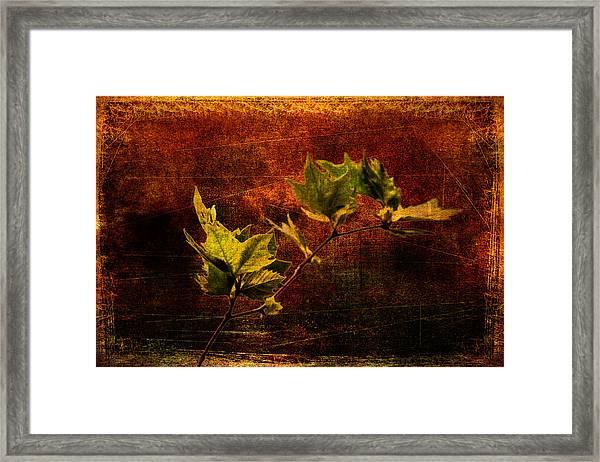 Leaves On Texture Framed Print