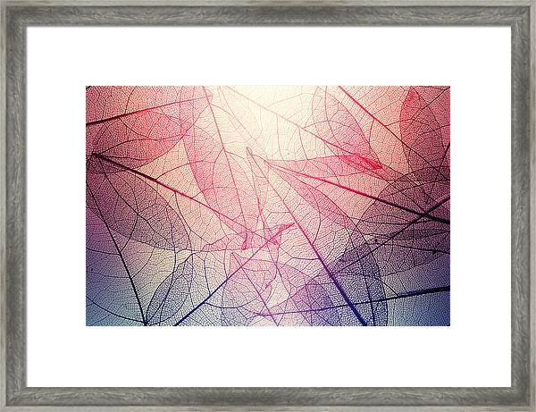 Leaves Skeleton Background Framed Print by Andrey Danilovich