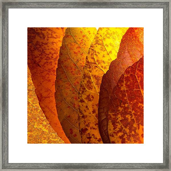 Leaves Unmasked Framed Print