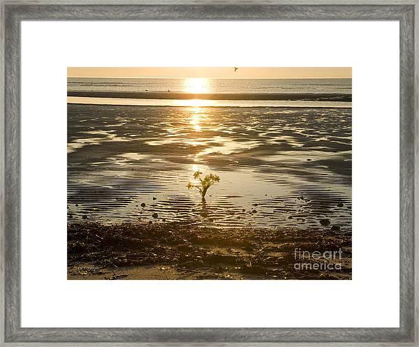 Leftover Bouquet Framed Print
