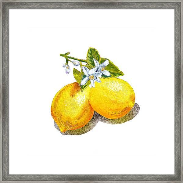 Lemons And Blossoms Framed Print
