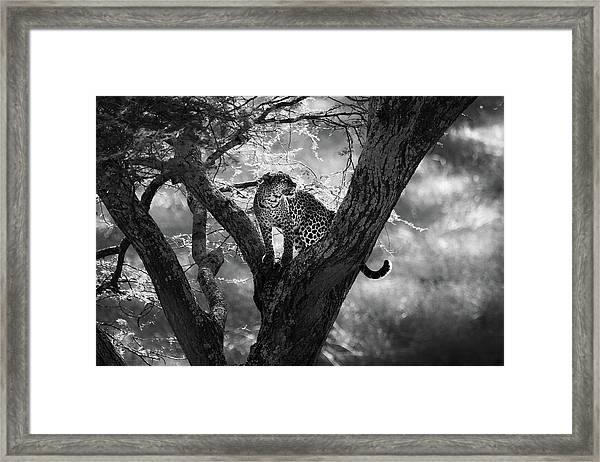 Leopard Framed Print by Bjorn Persson
