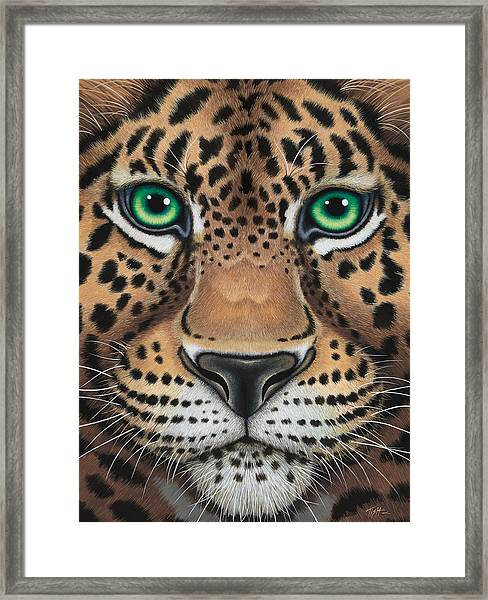 Wild Eyes Leopard Face Framed Print