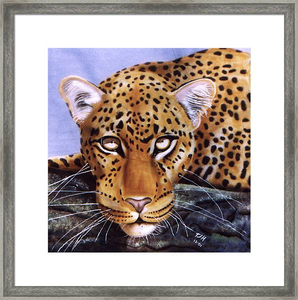 Leopard In A Tree Framed Print
