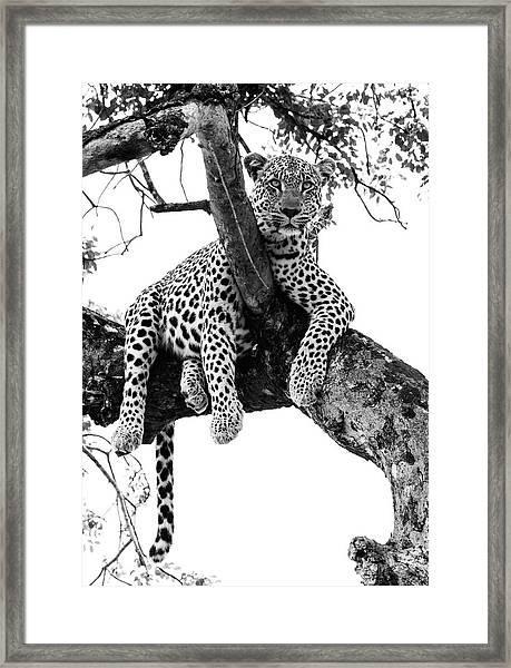 Leopard - Panthera Pardus. Leopard Will Framed Print