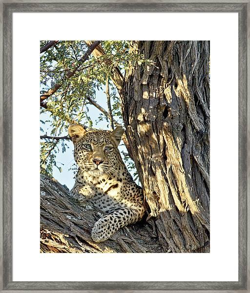 Framed Print featuring the photograph Leopard Portrait IIi by Gigi Ebert