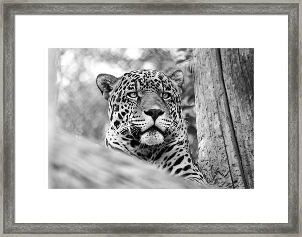 Leopards Don't Change Their Spots Framed Print