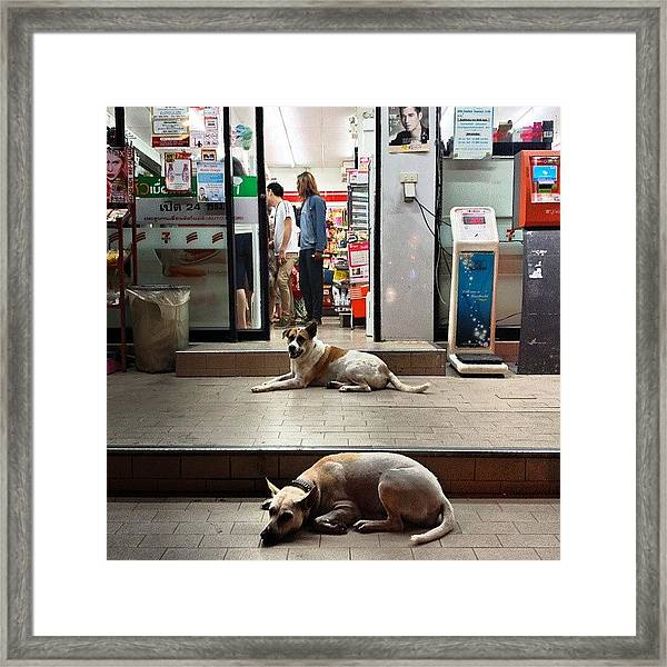 Framed Print featuring the photograph Let Sleeping Dogs Lie Where They May by Mr Photojimsf