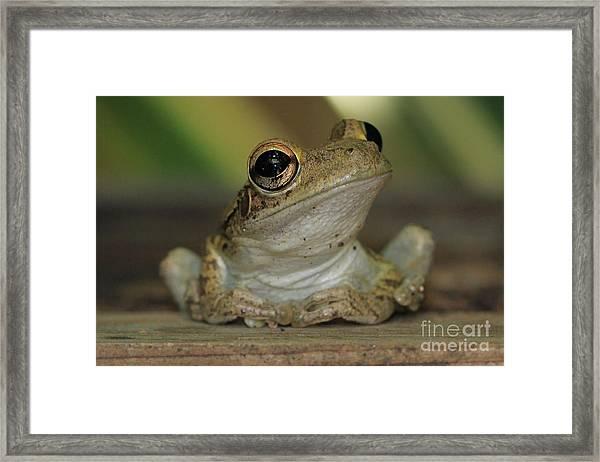 Let's Talk - Cuban Treefrog Framed Print