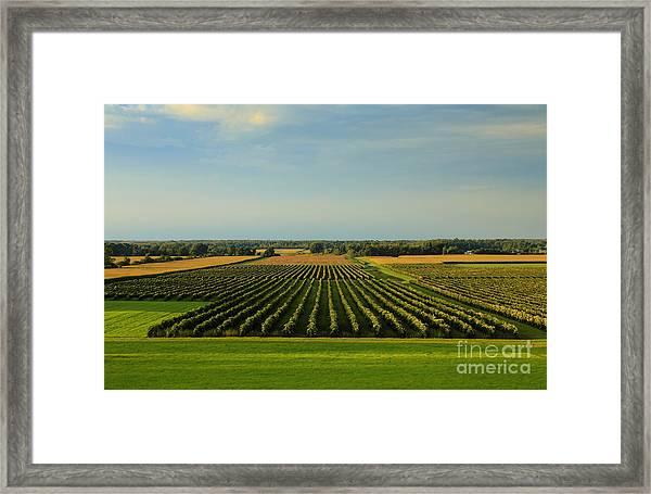Lewiston Summer Vineyards Framed Print