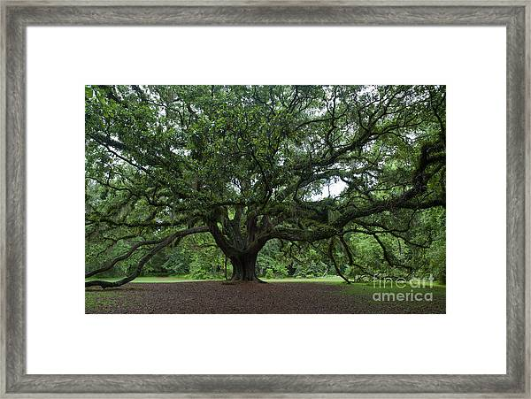 Lichgate Oak Framed Print