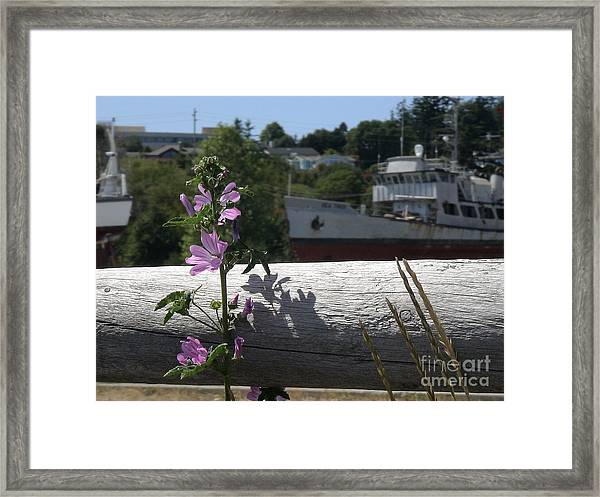 Life In The Boatyard Framed Print