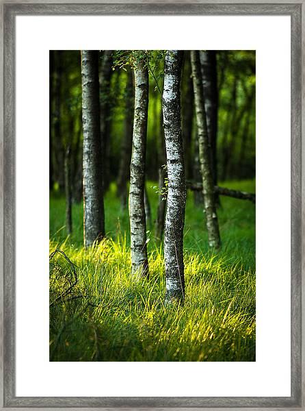 Life Is A Birch Framed Print