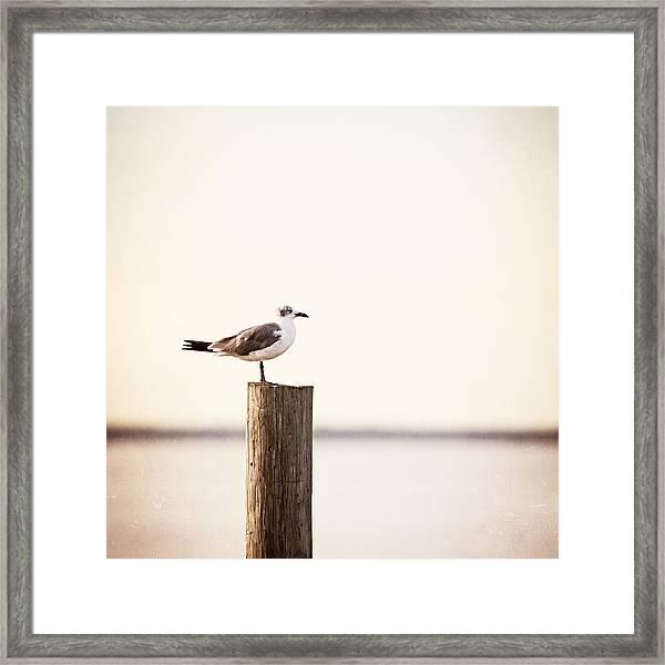 Life On The Bay Framed Print