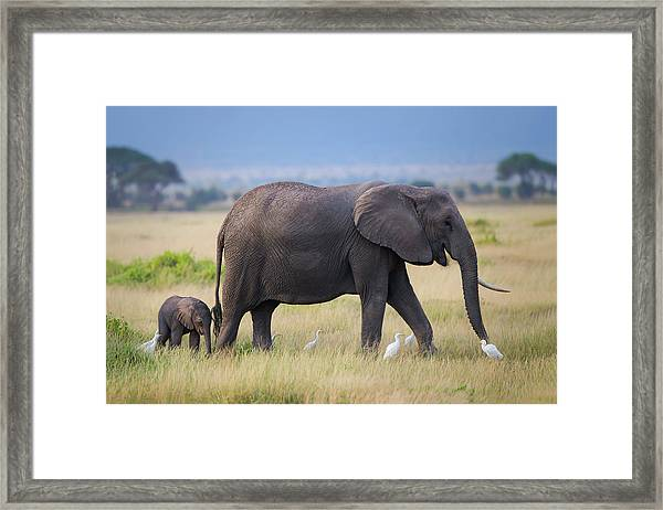Life Framed Print by Young Feng