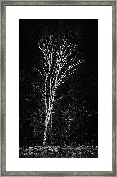 Life's A Birch No.2 Framed Print