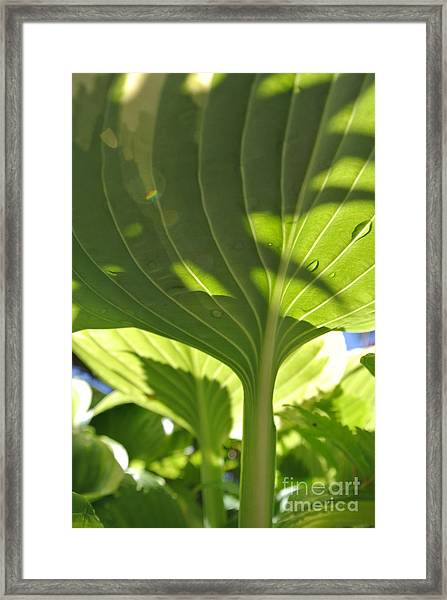 Light Above Framed Print