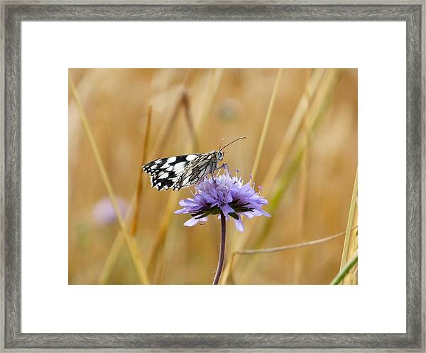 Light Butterfly Framed Print