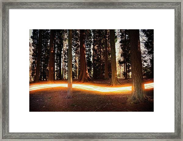 Light Trail Passing Around Trees Framed Print