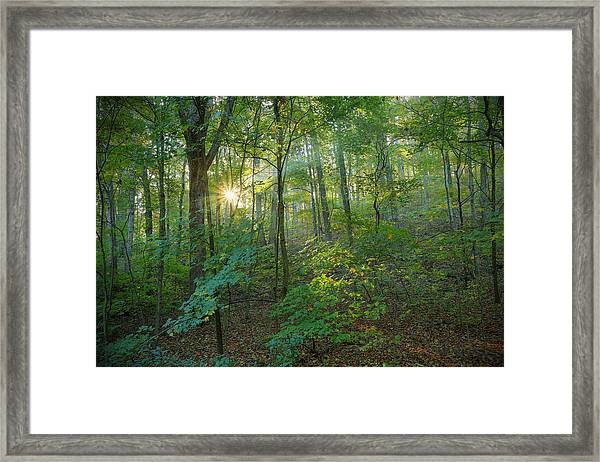Light Up The Forest Framed Print