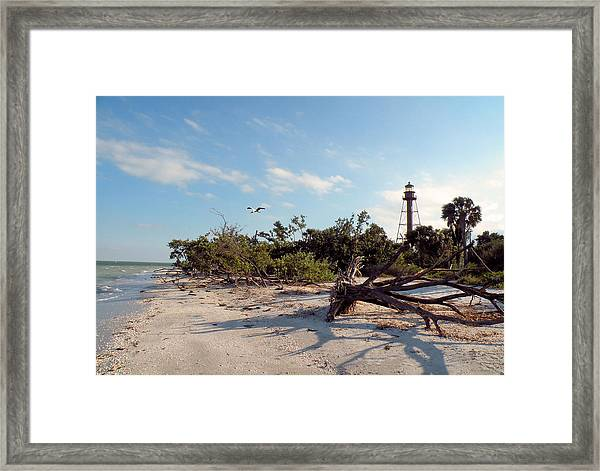 Lighthouse Beach Framed Print by Rosalie Scanlon