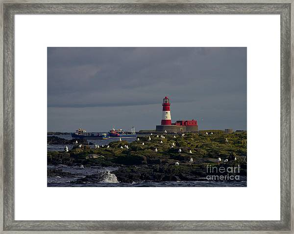 Lighthouse On The Farne Isands Northumberland Framed Print