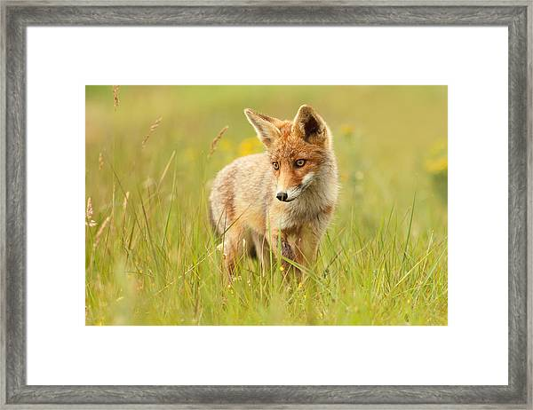 Lil' Hunter - Red Fox Cub Framed Print
