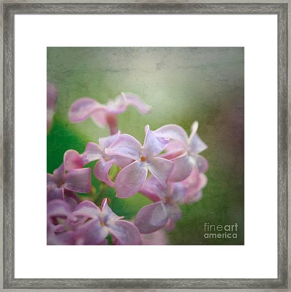 Lilac Dreaming  Framed Print