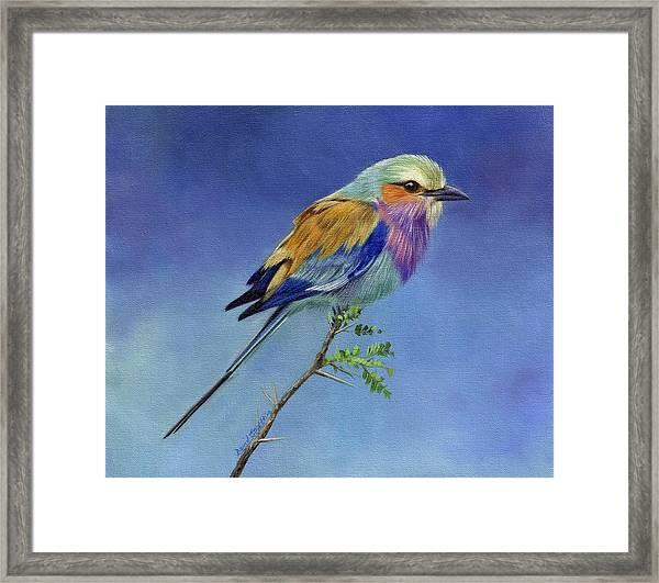 Lilacbreasted Roller Framed Print