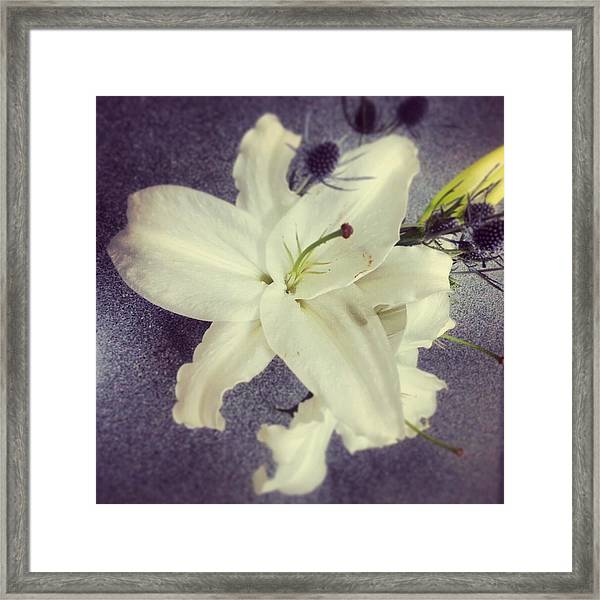 Lilies And Thistle Framed Print by Heather L Wright