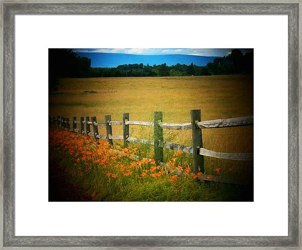 Lilies By The Fence Framed Print