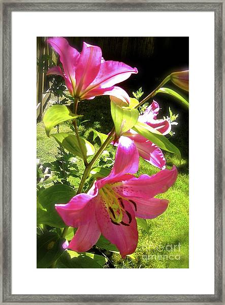 Lilies In The Garden Framed Print