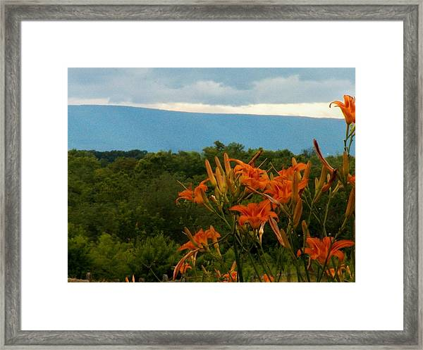 Lilies In The Valley Framed Print