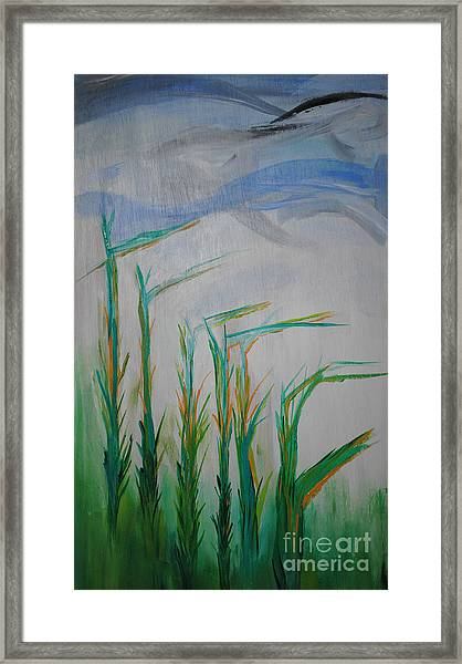 Lillies Of The Creek Framed Print