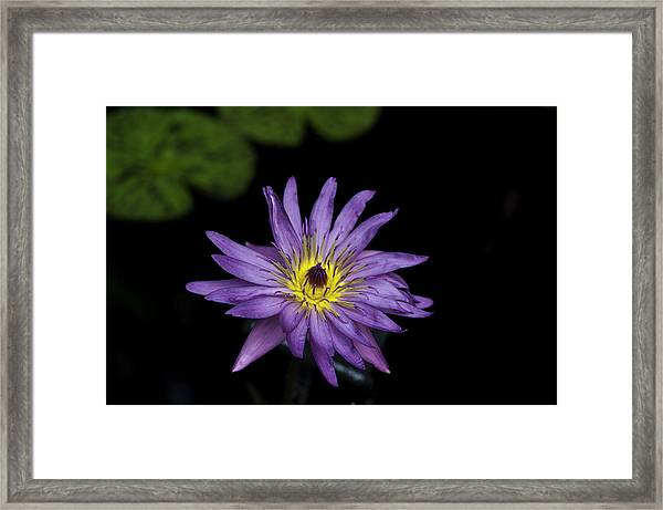 Lilly Glow Framed Print