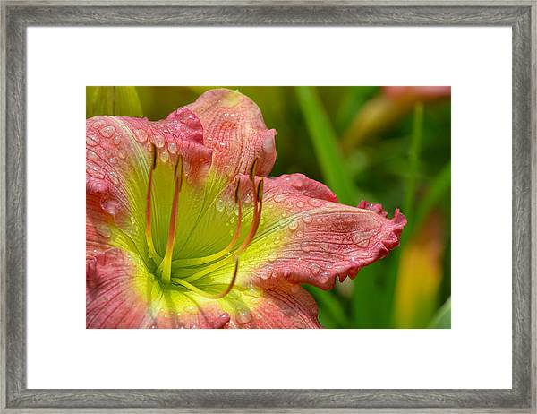 Framed Print featuring the photograph Lily After The Rain by Beth Sawickie
