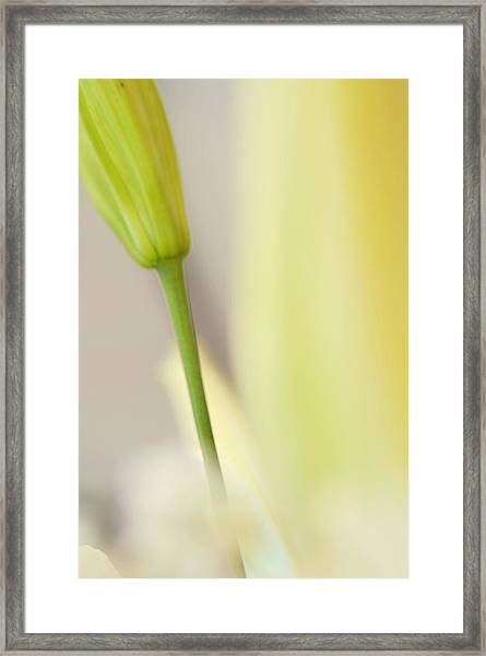 Lily Delight. Floral Abstract Framed Print