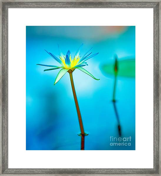 Lily In Blue Framed Print by Bill  Robinson