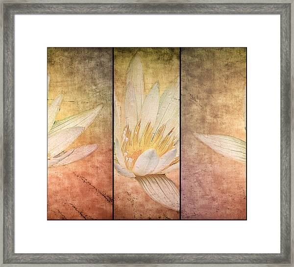 Lily Is A Trip Framed Print