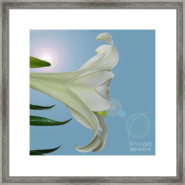 Lily Light Framed Print