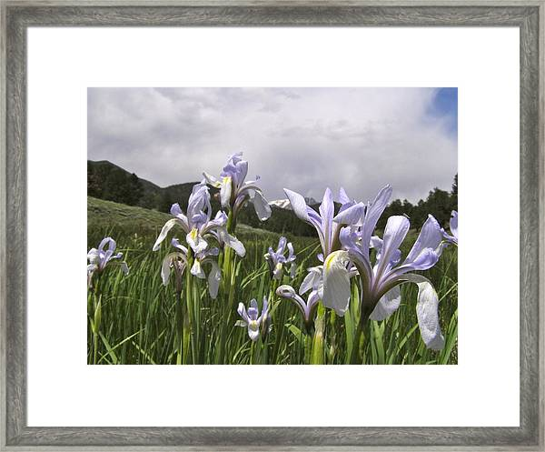 Lily Of The Mountains Framed Print