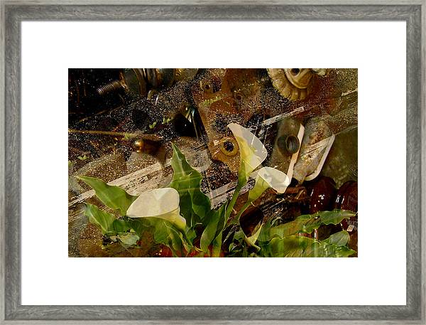 Lily Of The Scrap Pile Framed Print