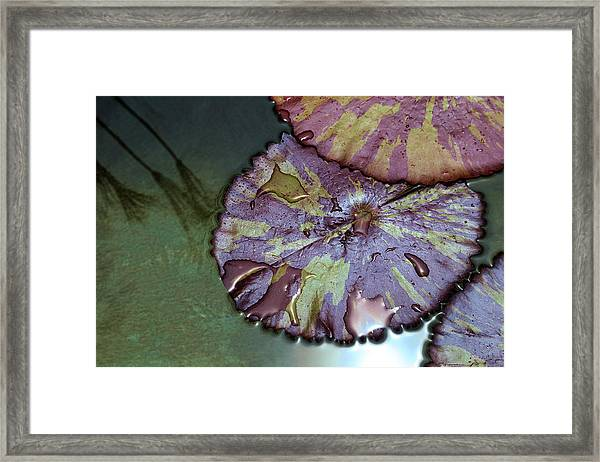 Lily Pads And Papyrus Reflection Framed Print