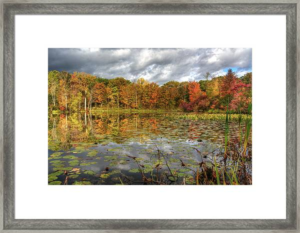 Lily Pads On Foster Pond Framed Print