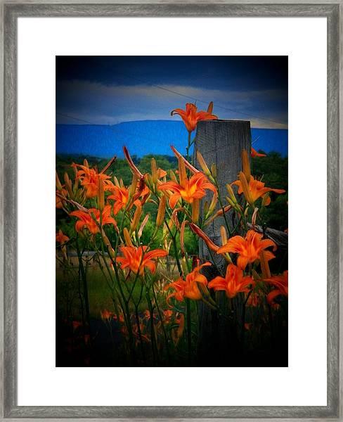 Lily Post Framed Print